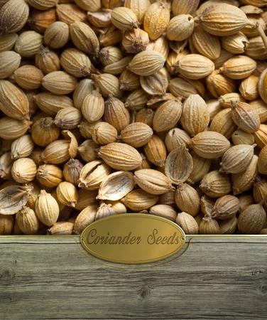 cilantro: Semillas de cilantro en marco de madera rústica con la etiqueta de oro