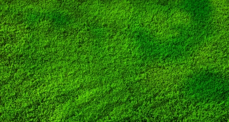 vegetal: Green background in a vegetal texture Stock Photo