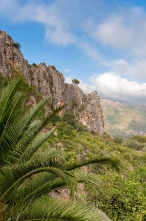 mountain peek: Mountain landscape with palm tree