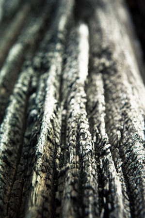 arboles blanco y negro: Tiro macro en corteza de árbol áspero