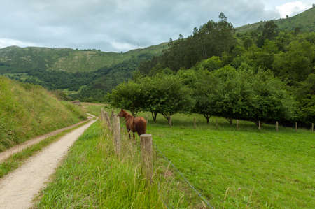Lonely rural path in Asturias, with a horse and lush vegetation photo