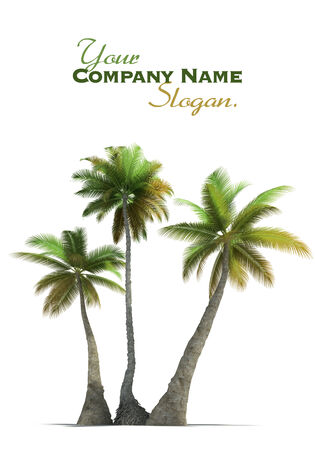 three palm trees: 3D rendering of three  palm trees on a neutral white background  Stock Photo