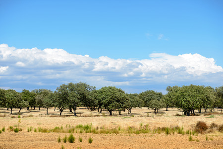 paisaje mediterraneo: T�pico paisaje mediterr�neo