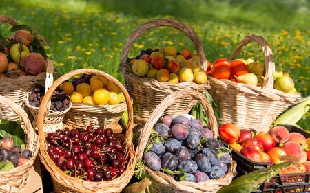 canastas con frutas: Canastas de frutas en el medio de un interpusieron