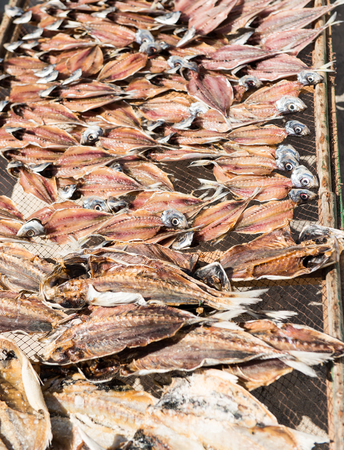 sundry: Fish drying in the sun in Portugal