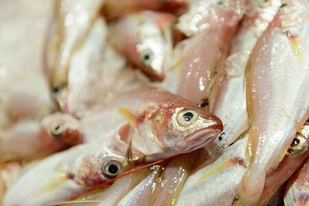 fishmonger: fish on ice at the fishmonger