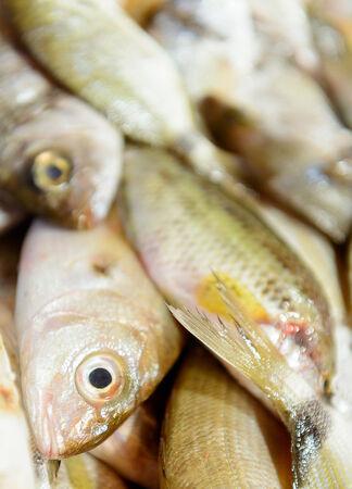 visboer: vis op ijs bij de visboer