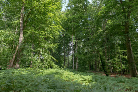 underbrush: Photography in the heart of the forest Stock Photo