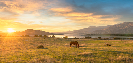 Rural scene with lake, fields and horses at sunset Stockfoto