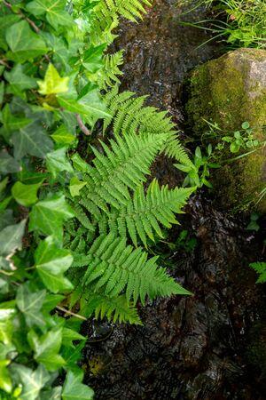 Dense vegetation by a small creek Banco de Imagens