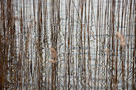 Abstract, reeds and reflections in the water of a lake