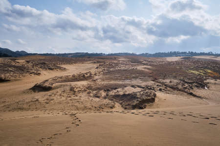 A grassland outside of sand dunes in winter at Tottori, Japan. Imagens - 118390870