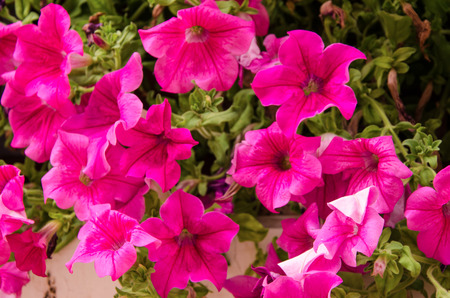 rimini: Colors flowers in Rimini