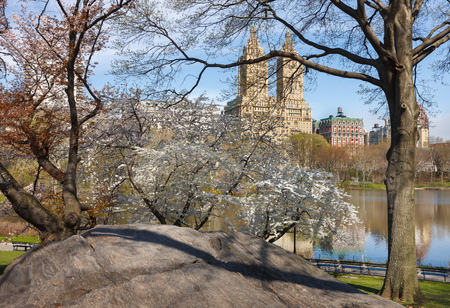 Rock formation and blooming Yoshino Cherry Trees in spring next to The Lake in Central Park Upper West Side Manhattan New York City. Stock Photo