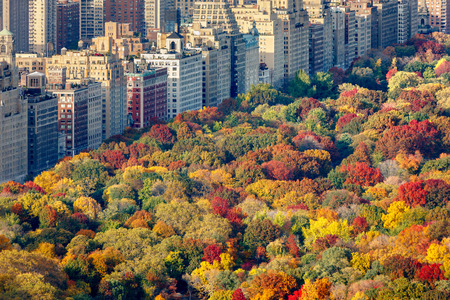 Brilliant fall colors of Central Park foliage in late afternoon. Aerial view toward Central Park West. Upper West Side, Manhattan, New York City