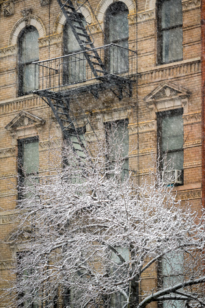 winter escape: Snow covered tree in front of a Chelsea building facade during a snowstorm in Manhattan, New York City.