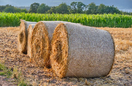 Four hay bales lying on a cut agricultural field in July in a beautiful german summer landscape