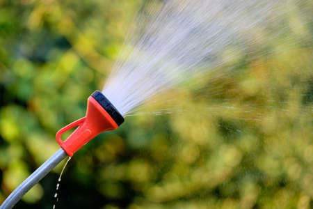 Watering the garden on the evening of a hot summer day with a spray watering lance Stok Fotoğraf