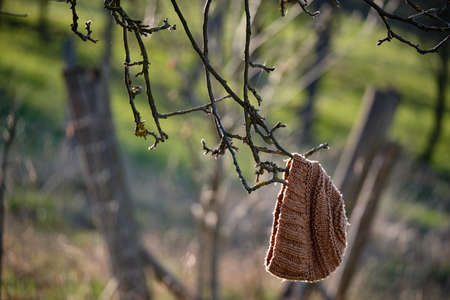 A lost brown woolen cap hanging in the sunlight on a twig of a tree in Franconia, Germany, in March 2019 Banque d'images