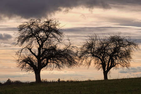A moody evening sky above two trees on a field in the countryside. The sky with some intense clouds shortlly before sunset and after it cleared up after some quite rainy days. Seen near Heroldsberg, Germany, March 2019