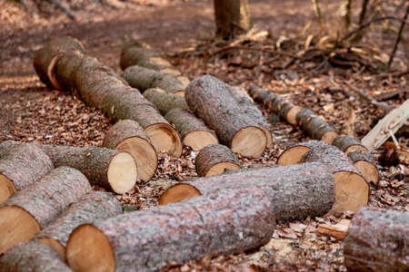 Freshly cut tree trunks lying on the ground in the forest in Germany at the end of March
