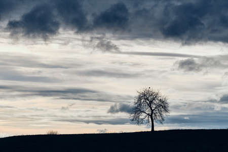 A lonely bare tree on a field in a moody gray landscape with a gray sky with clouds. Seen near Heroldsberg, Germany, March 2019 Banque d'images
