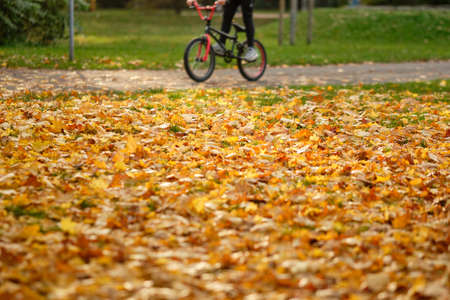 Lawn in a park covered with beautiful yellow and orange fallen autumn leaves with an adolescent with a bmx bike riding along in the background