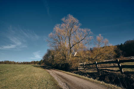 A beautiful bare tree in a countryside landscape on the first days of spring. Lakes near Haimendorf in Franconia / Bavaria, Germany