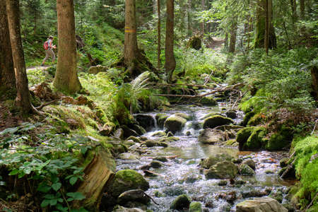 Beautiful idyllic landscape in the woods of the Bavarian Forest with a woman hiking and a creek named Sollerbach flowing along near Lohberg, Germany in summer Banque d'images