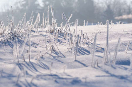 Beautiful frozen grass on snow covered field in backlight on a beautiful winter morning in Germany 免版税图像