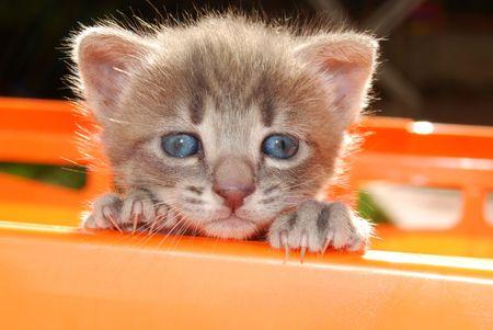 cats: Faccia del gatto, pur cercando di uscire dal cestello