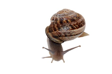 counterclockwise: Snail Number 3 Stock Photo