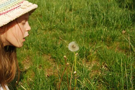 The girl and the dandelion - A little girl blows hard on a dandelion 040 photo