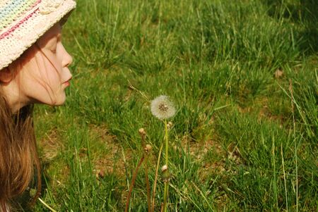 The girl and the dandelion - A little girl blows hard on a dandelion 041 photo