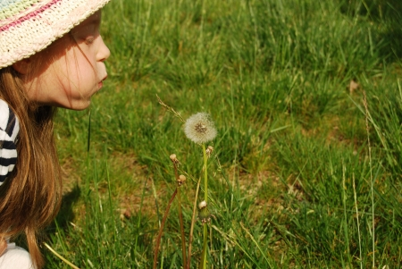 The girl and the dandelion - A little girl blows hard on a dandelion 045 photo