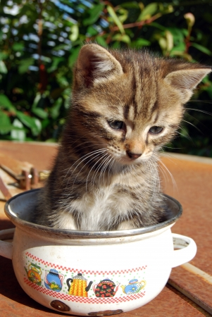 A small kitten took refuge in a pot