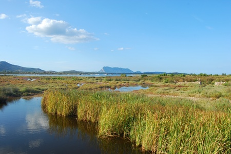 The pond of San Teodoro - Sardinia - Italy - 581 photo