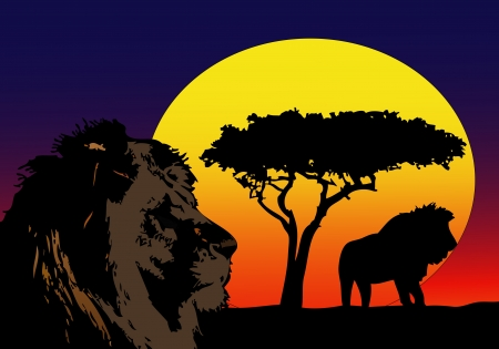 suggestive: Lions in Africa Illustration