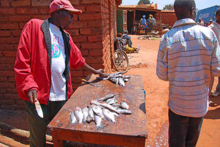 fish exhibition: August 2014 - Village of Pomerini - Tanzania - Africa - A cleaner of fresh fish at the market monthly on the streets in the Village of Pomerini in Tanzania - Africa
