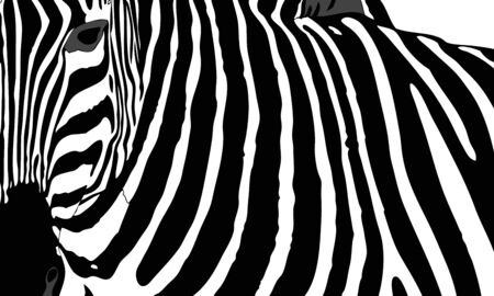 national parks: Graphic illustration representing the mantle of a zebra Stock Photo