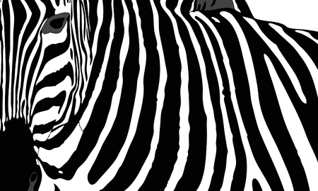 Graphic illustration representing the mantle of a zebra Çizim