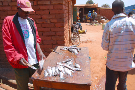 village man: August 28, 2014, Village of Pomerini, Tanzania, Africa-An unidentified man cleans the fish on her market stall in the village Pomerini to sell it directly or put it to dry in the sun