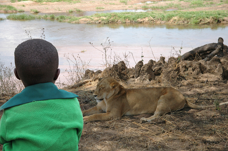 observes: The child and the lioness - A child observes a lioness in the savannah of Tanzania - Africa Stock Photo