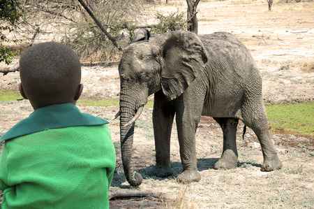 african animals: An African child as he watches a elephants in the savannah in Tanzania - Africa