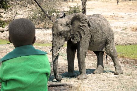 garcon africain: Un enfant africain comme il regarde un éléphant dans la savane en Tanzanie - Afrique Banque d'images