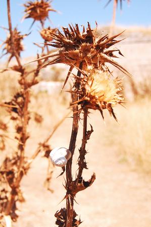 sunburned: Summer vegetation sunburned of the Murgia - Basilicata - Italy