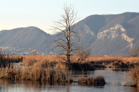 bogs: The rare phenomenon of the frozen bogs of Lake Iseo - Brescia - Lombardy - Italy