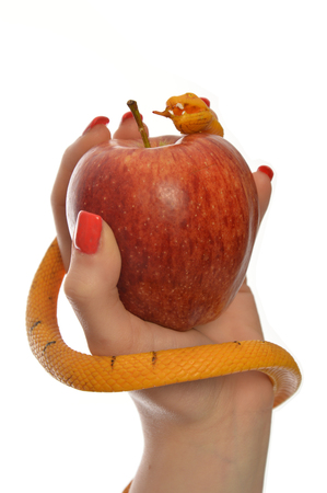 Metaphorical image of the symbolism of Adam and Eve 0017 Stock Photo