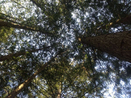 Looking up at the sky from the bottom of the rain forest- BC Canada