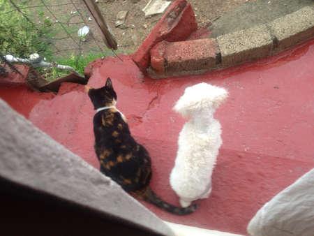 Friends watching the rain